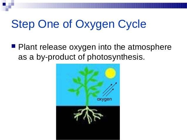 Oxygen cycle oxygen 13 photosynthesis plants take in carbon dioxide ccuart Images