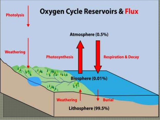 Oxygen Cycle Pres 1