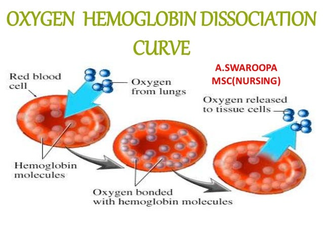 structure function relationship in myoglobin and hemoglobin