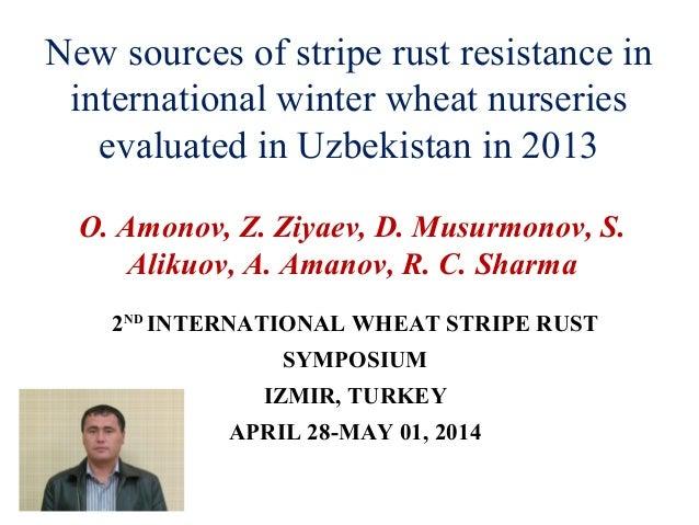 New sources of stripe rust resistance in international winter wheat nurseries evaluated in Uzbekistan in 2013 O. Amonov, Z...