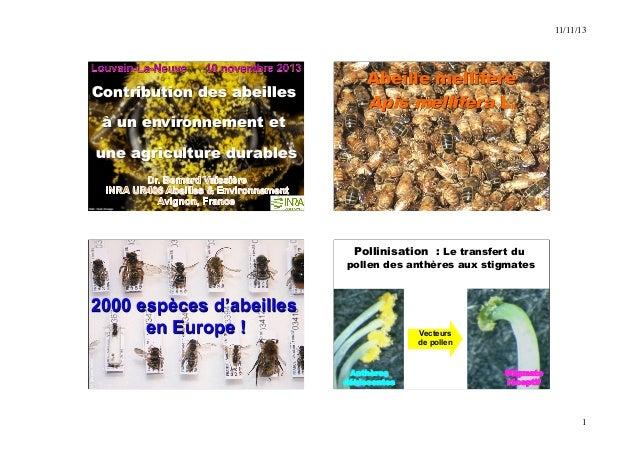 11/11/13  1  Contribution des abeilles  à un environnement et  une agriculture durables  Abeille mellifère  Apis mellifera...