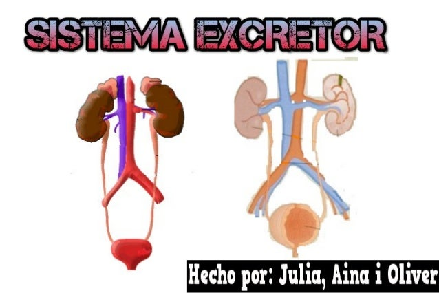 ●  Definició  ●  Òrgans que formen el sistema  ●  Localització en el cos  ●  La Funció  ●  ●  Quina té amb els altres i qu...