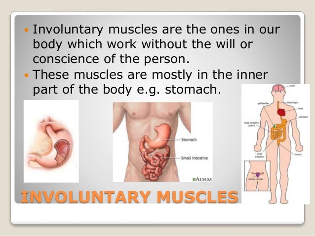what are muscles?, Human Body