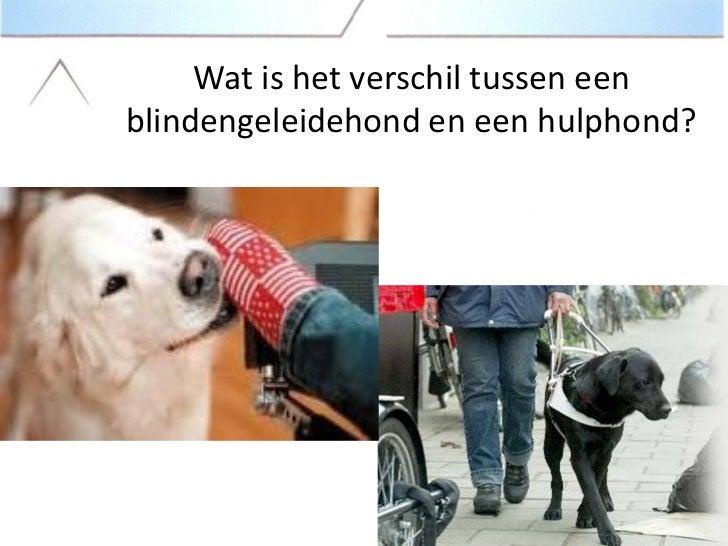 Wat is het verschil tussen eenblindengeleidehond en een hulphond?
