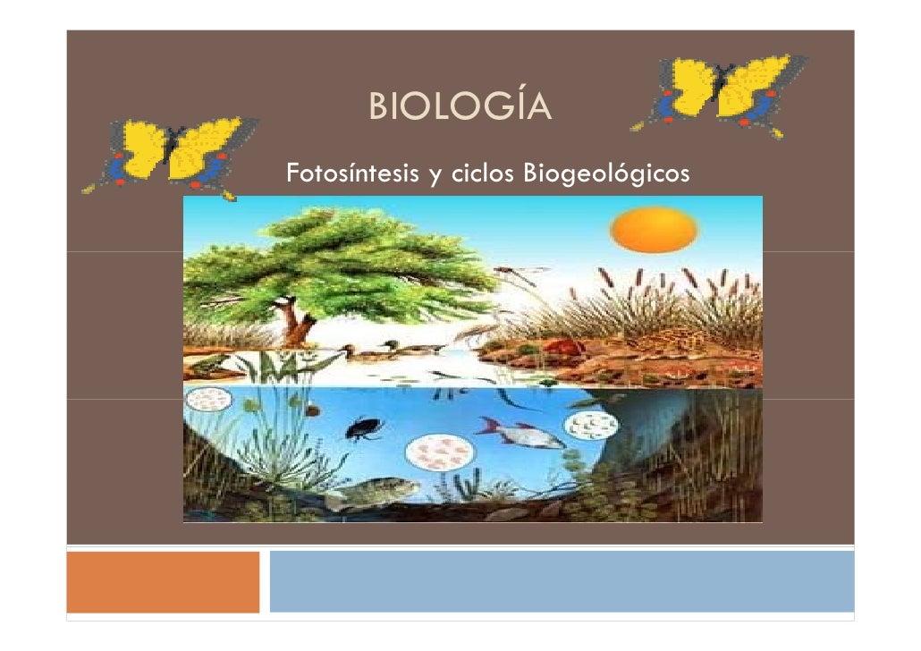 BIOLOGÍA Fotosíntesis y ciclos Biogeológicos