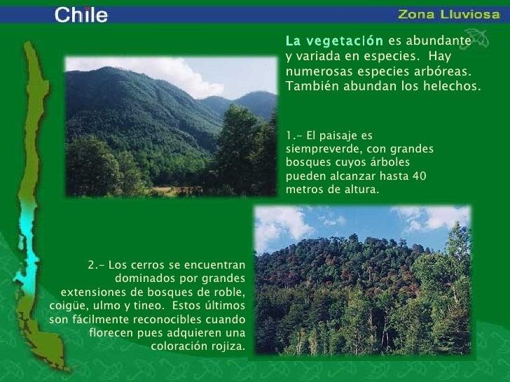 Plantas de chile for Poda de arboles zona sur