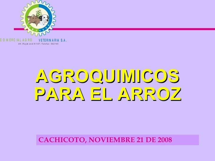 AGROQUIMICOS PARA EL ARROZ <ul><li>CACHICOTO, NOVIEMBRE 21 DE 2008 </li></ul>