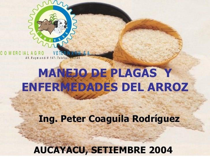 MANEJO DE PLAGAS  Y ENFERMEDADES DEL ARROZ AUCAYACU, SETIEMBRE 2004 Ing. Peter Coaguila Rodríguez