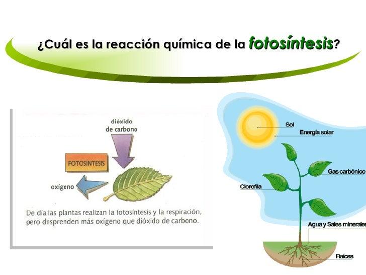 reacción química de la fotosíntesis
