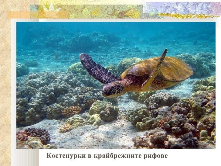 Костенурки в крайбрежните рифове