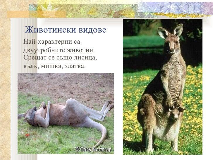 Животински видовеНай-характерни садвуутробните животни.Срещат се също лисица,вълк, мишка, златка.