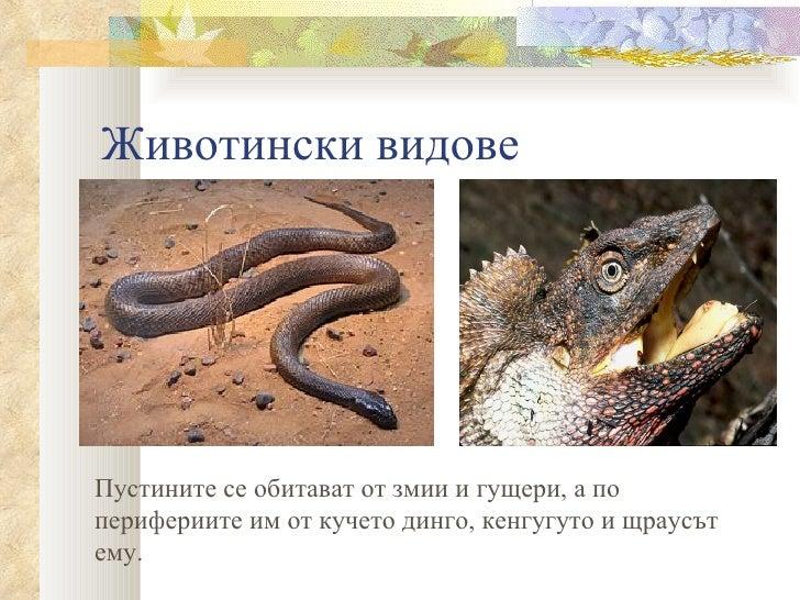 Животински видовеПустините се обитават от змии и гущери, а поперифериите им от кучето динго, кенгугуто и щраусътему.