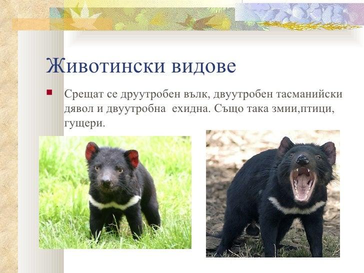 Животински видове   Срещат се друутробен вълк, двуутробен тасманийски    дявол и двуутробна ехидна. Също така змии,птици,...