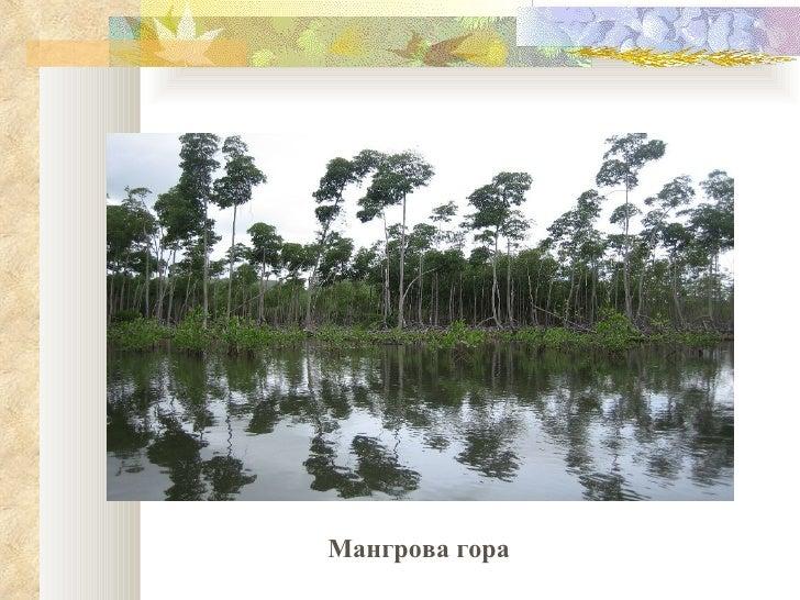 Мангрова гора