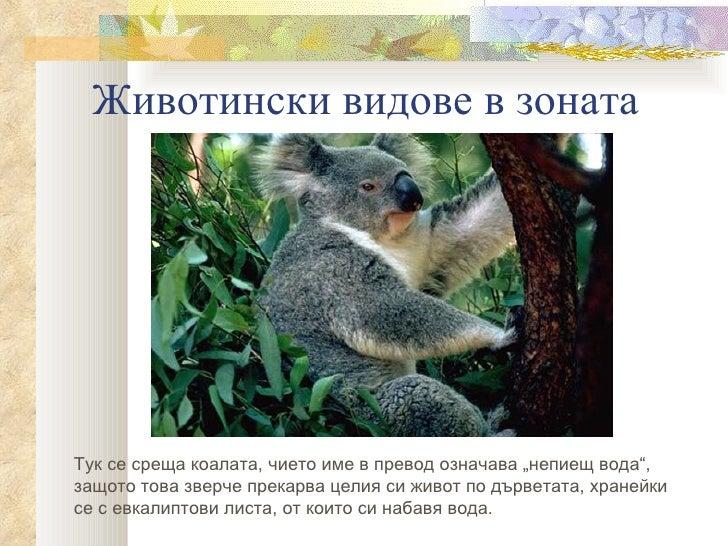 """Животински видове в зонатаТук се среща коалата, чието име в превод означава """"непиещ вода"""",защото това зверче прекарва цели..."""
