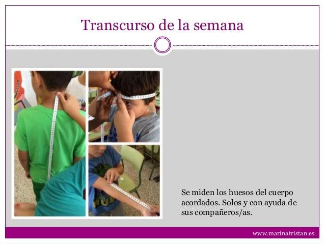 Transcurso de la semana Se miden los huesos del cuerpo acordados. Solos y con ayuda de sus compañeros/as. www.marinatrista...