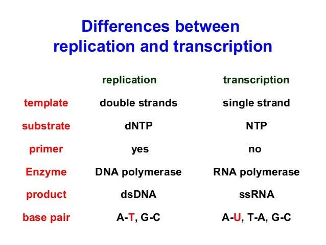 transcription and translation steps pdf