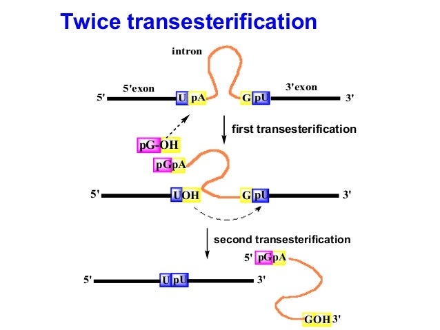 transcriptional regulation thesis We characterized the tcst-mediated transcriptional regulation of acxabc expression by examining the physical interaction of thesis is part of honors etd.