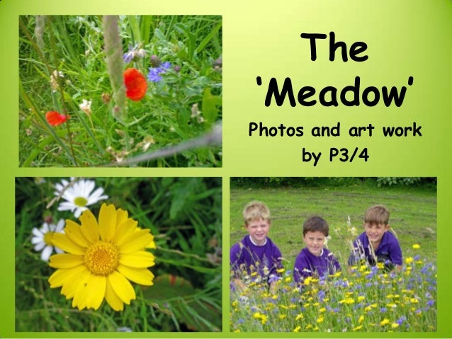 The'Meadow'Photos and art work      by P3/4
