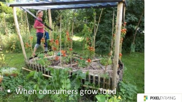 ▪ Some biological and environmentally friendly farmers already use intercropping