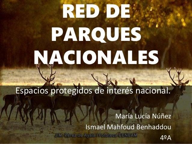 RED DE PARQUES NACIONALES Espacios protegidos de interés nacional. María Lucía Núñez Ismael Mahfoud Benhaddou 4ºA