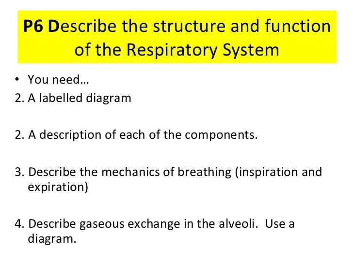 P6 D escribe the structure and function of the Respiratory System <ul><li>You need… </li></ul><ul><li>A labelled diagram  ...