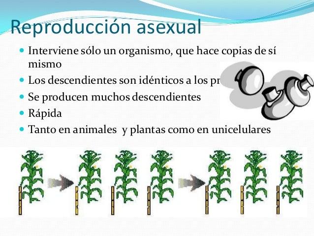 Reproduccion asexual de las celulas procariotas