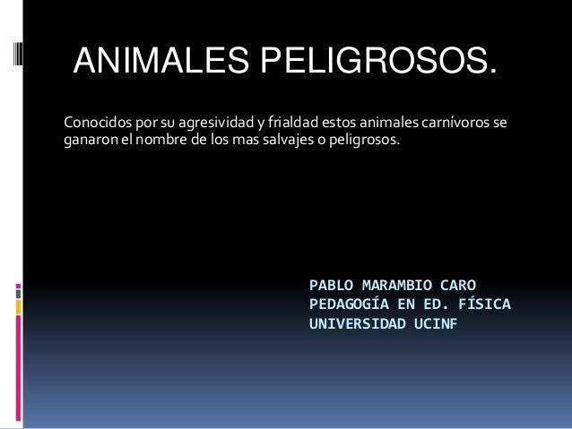 ANIMALES PELIGROSOS.Conocidos por su agresividad y frialdad estos animales carnívoros seganaron el nombre de los mas salva...