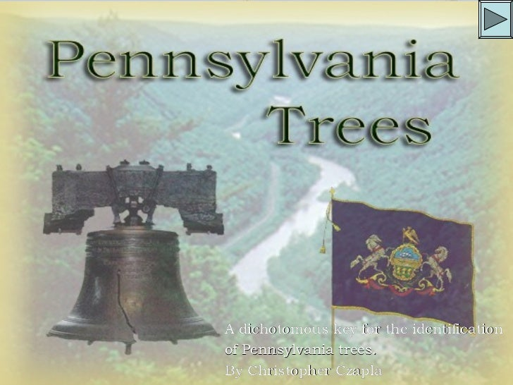 A dichotomous key for the identificationof Pennsylvania trees.By Christopher Czapla