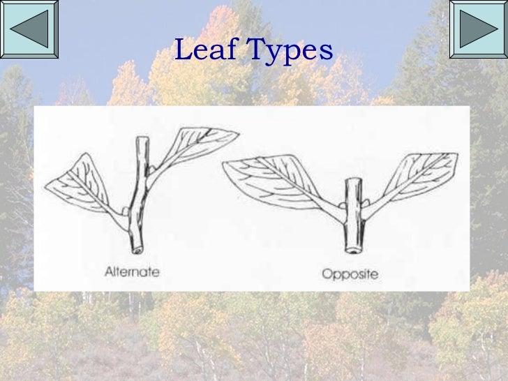 Pa common trees
