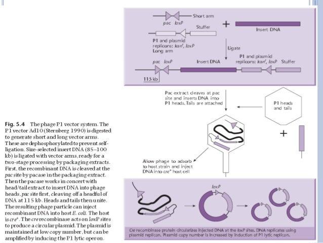 Pac vector ppt 7 description of the diagram ccuart Gallery