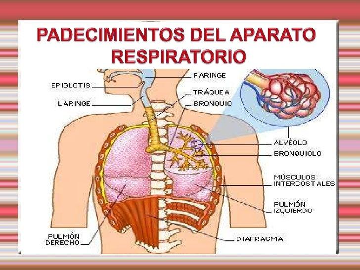 MALFORMACIONES CONGENITAS  ATRESIA O AGENESIA DE COANAS  Anomalía congénita más frecuente de las vías nasales.