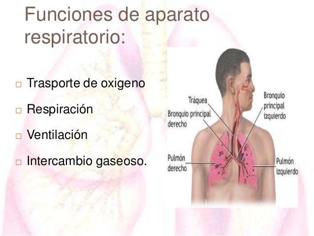 Funciones de aparato respiratorio:   Trasporte de oxigeno    Respiración    Ventilación    Intercambio gaseoso.