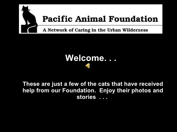 Welcome. . .   These are just a few of the cats that have received help from our Foundation.  Enjoy their photos and stori...
