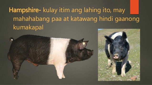 how to cook paa ng baboy