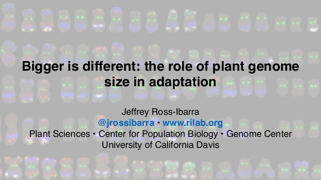 Jeffrey Ross-Ibarra @jrossibarra • www.rilab.org Plant Sciences • Center for Population Biology • Genome Center University...