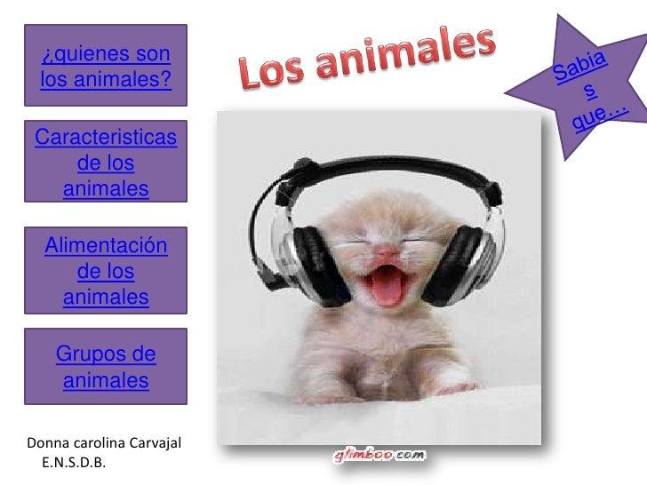 ¿quienes son   los animales?   Caracteristicas      de los    animales    Alimentación       de los     animales      Grup...