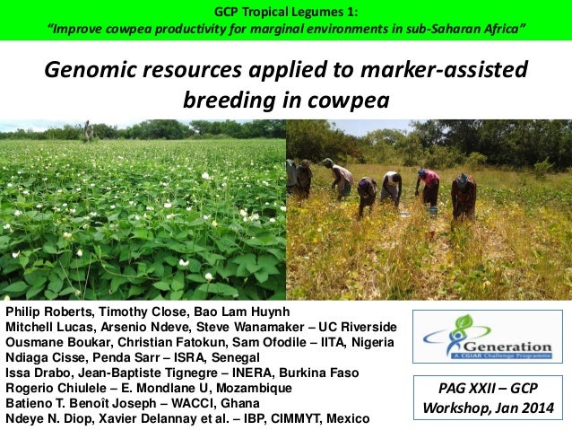 "GCP Tropical Legumes 1: ""Improve cowpea productivity for marginal environments in sub-Saharan Africa""  Genomic resources a..."