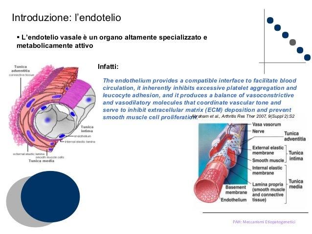 Eziopatogenesi Ipertensione Polmonare Arteriosa-PAH..