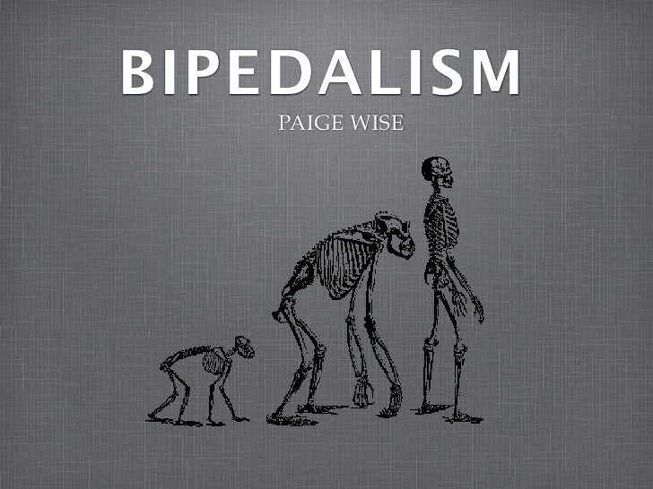 BIPEDALISM    PAIGE WISE