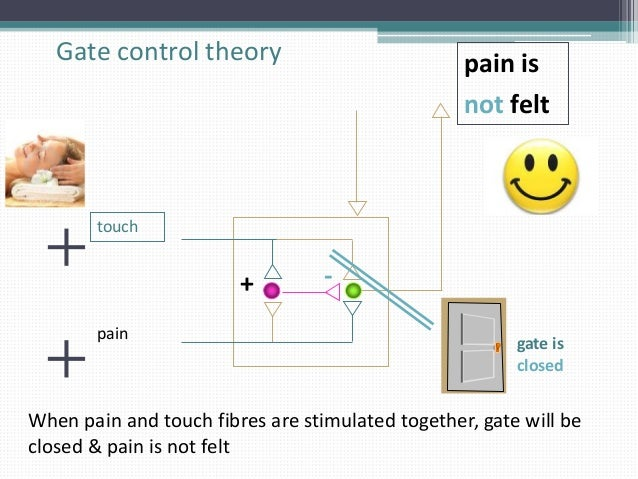 study of gate control theory and pain A psychological salve: scientists study gate control theory of pain, states that the emotion and thought centers in our brain actually have the ability to control.