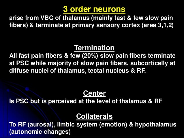 3 order neurons arise from VBC of thalamus (mainly fast & few slow pain fibers) & terminate at primary sensory cortex (are...