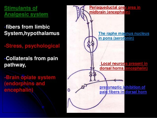 Clinical Hyperalgesia- increase sensitivity to pain is known as hyperalgesia. It may be due to: 1) primary hyperalgesia- i...