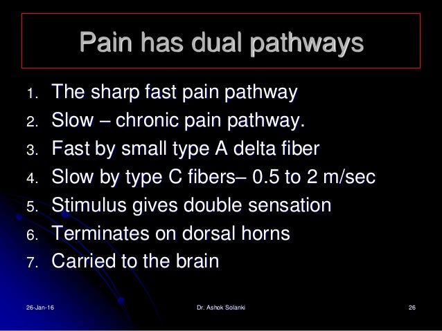 Referred Pain – why away from the site of origin?  Dermatomal Rule- embriological devlopment of embriyo. plasticity in th...