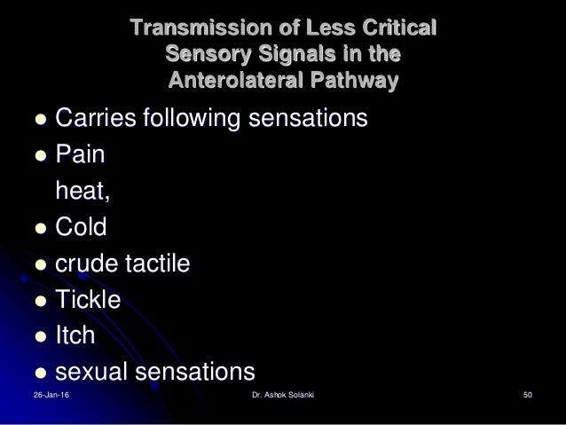 PALEOSPINOTHALMIC TRACT for transmitting slow- chronic pain  Slow –chronic type C fibers  Lamina 2 and 3 of dorsal horns...
