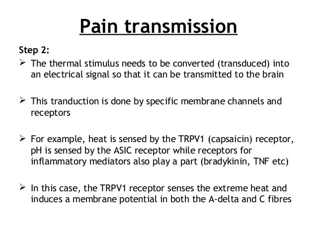 Pain transmission Step 2:  The thermal stimulus needs to be converted (transduced) into an electrical signal so that it c...
