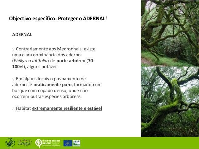 Resultados na conservação na Mata Nacional do Buçaco Slide 2