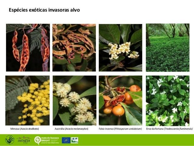 Resultados na conservação na Mata Nacional do Buçaco Slide 3