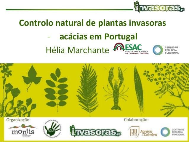 Controlo natural de espécies invasoras| NATIVA/MONTIS| 11 Julho 2017 Controlo natural de plantas invasoras - acácias em Po...