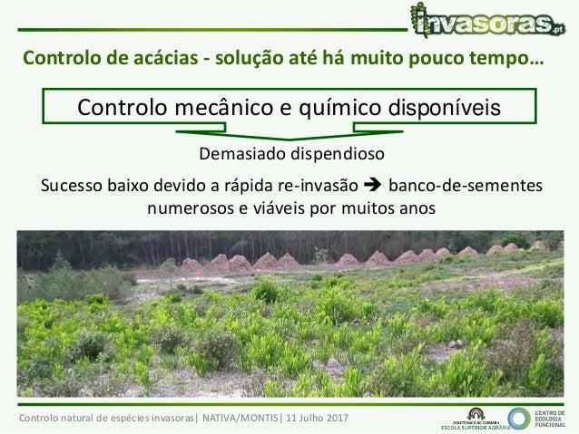 Controlo Natural de plantas invasoras  Slide 3